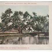 DPC Washington Oak Audubon Park New Orleans LA Louisiana Vintage Postcard