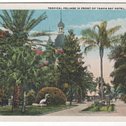 SOLD Tropical Foliage in Front of Tampa Bay Hotel Tampa FL Florida Vintage Postcard - Red Tag