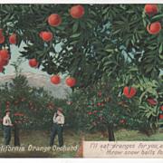 In a CA California Orange Grove Vintage Postcard