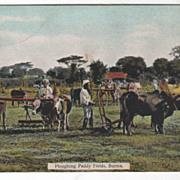 Plowing (Ploughing) Paddy Fields Burma Vintage Postcard