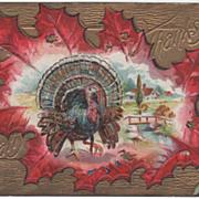 Turkey Gobbler Framed against an Oak Leaf Vintage Thanksgiving Postcard