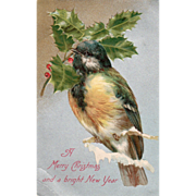 Large Bird on a Tree Twig and a Sprig of Holly Vintage Christmas Postcard