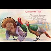 Large Turkey Gobbler with a Turkey Hen Corn Shocks Vintage Thanksgiving Postcard