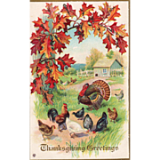 Turkey Gobbler with Chickens in a Barnyard Vintage Thanksgiving Postcard