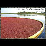 Wisconsin Cranberries Warrens Wisconsin WI Vintage Postcard