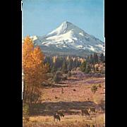 Eliot Glacier below the Peak Mt Hood OR Oregon Vintage Postcard