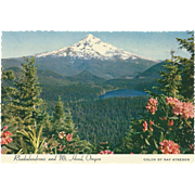 Rhododendrons Lost Lake and Mt Hood OR Oregon Vintage Postcard