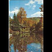 New York State Conservation School Narrowsburg NY New York Vintage Postcard