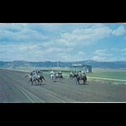 Horses Parading at La Mesa Park Track Raton NM New Mexico Vintage Postcard