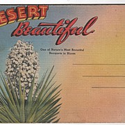 Desert Beautiful Souvenir Folder Western United States