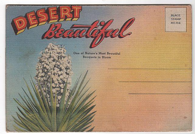 Desert Beautiful Souvenir Folder Western United States