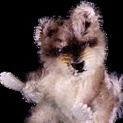 Tiny Sister Steiff Rare Begging Raccy Raccoon Waschbaer '57-'64