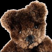 Tiny Brother Rare Dark Brown Steiff 5xJointed Original Teddy Bear