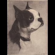 Dog Etching by Morgan Dennis