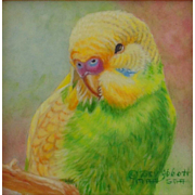 Green and Gold Parakeet/Budgerigar