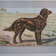 """Dogs, Wild Game and Enemies"" by P. Mahler - 180 prints from 1907"