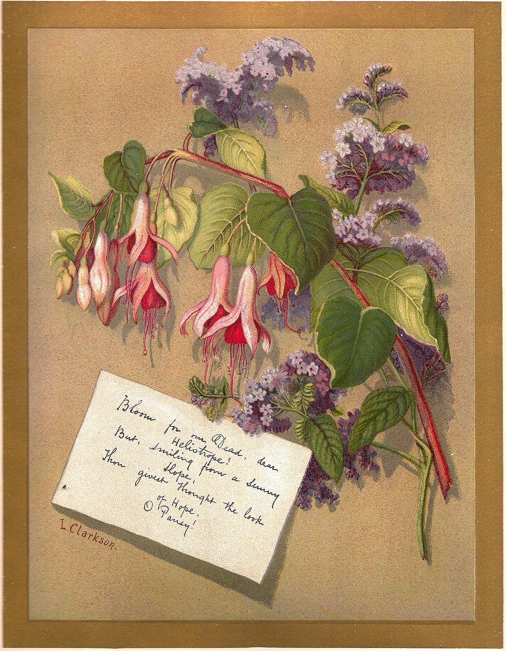 Antique PRINT - 'FUCHSIA & HELIOTROPE' ~ Victorian Chromolithograph c.1880s
