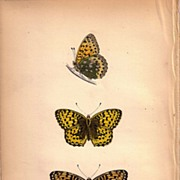 Lovely Colored Plate from Morris Butterfly Book, DARK GREEN FRITILLARY