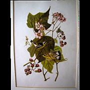 Lovely Framed Audubon Print, Black & Yellow Warbler