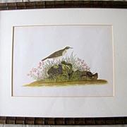 Lovely Framed Audubon Print, Sandpiper