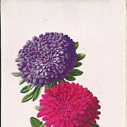 Gorgeous Chromolithograph of Asters, Page from Antique Book