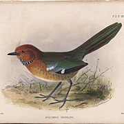 1875 Hand-Finished Color Lithographs John G. Keulemans, PZS