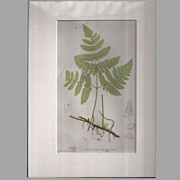 Circa 1859 Engraving Print from Octavo Nature-Printed British Ferns