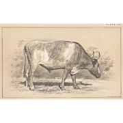 SALE Bi-Color Lithograph GRAY OX Julius Bien 1888