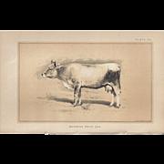 SALE Bi-Color Lithograph Bavarian Prize COW c. 1888 Julius Bien