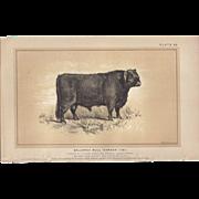 """SALE Bi-Color Lithograph Galloway Bull """"HARDEN"""" c. 1888 Julius Bien"""