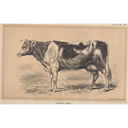 SALE Bi-Color Lithograph DUTCH COW c. 1888 Julius Bien