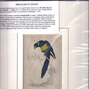 19th Century Engraving by Joseph B. Kidd, ZONED PARROT, Matted