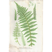 SOLD Circa 1859 Print From BRITISH FERNS by Thomas Moore