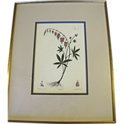 Framed Botanical Etching BLEEDING HEARTS by artist Dan Mitra Hand Colored