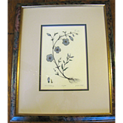 Framed Botanical Etching BLUE BUTTERCUP by artist Dan Mitra Hand Colored