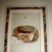 REDUCED Lovely 19th C. Matted Bird Nest & Egg Plate from Book