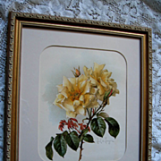 c1902 Paul de Longpre Roses Print Chromolithograph Autographed by Book Author
