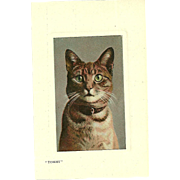 "Real Glossy Photograph Post Card Postcard "" Tommy ""  Cat Portrait  Valentine's Serie"