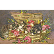 Charming Vintage Kitten Kitty Cats Post Card Signed D.  Merlin