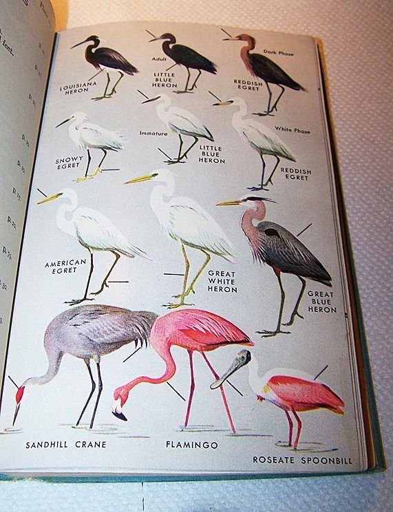 Hard Cover Book A Field Guide To The Birds Peterson