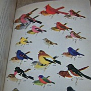 A Field Guide to The Birds Book C. 1939