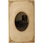 Unusual Tintype of Two Dogs