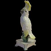 "SALE RARE 7"" Nymphenburg Porcelain Cockatoo  ""Yellow"""