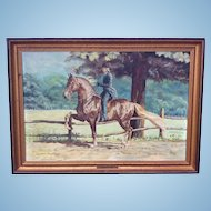 Original Oil Painting of Morgan Horse Quakers Acre Treble by Equestrian artist Elizabeth Sharp 1978