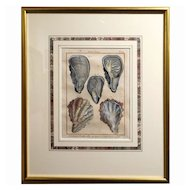 Antique Hand Colored French Etching Of Shellfish