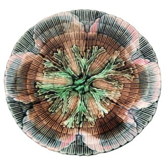 Etruscan Majolica Shell & Seaweed 6 1/8 inch Plate