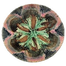 Etruscan Majolica Shell & Seaweed 6  inch Plate