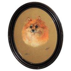 """Pastel Portrait of the Pomeranian Dog, """"Jaffa,"""" by Dorothy Hallett"""