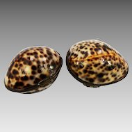 Pair Vintage natural Tiger Cowrie sea Shell pill, trinket Boxes in brass mounts