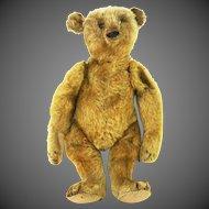 "Antique Steiff 12"" Bear ca1910"